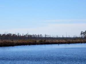 Marsh Lands Along the Canal