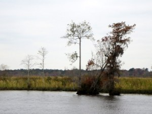 Marshes in South Carolina