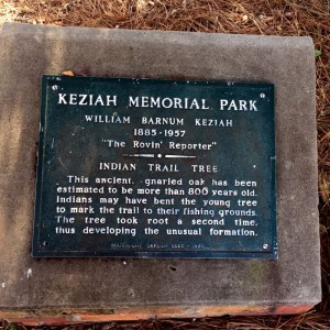 Plaque Explaining the Indian Trail Tree