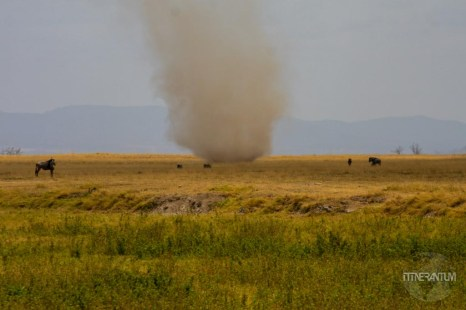 Dust swirl in Amboseli, Kenya