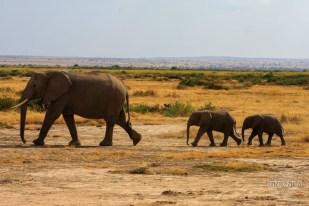 Elephant mother and two babies-Amboseli, Kenya