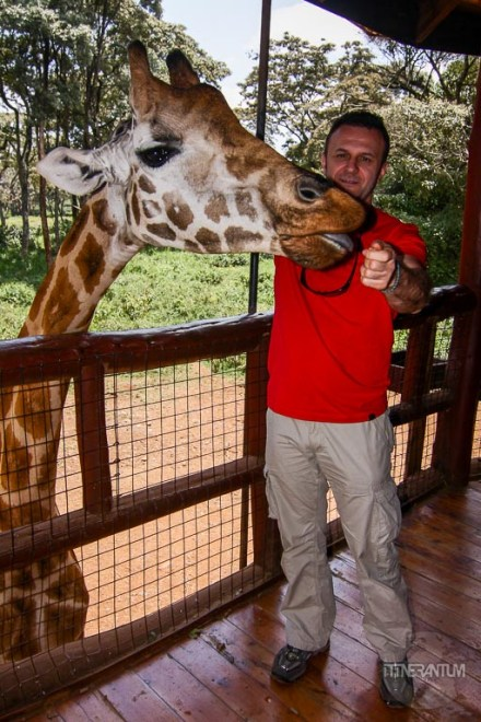 man on an observation deck feeding a giraffe