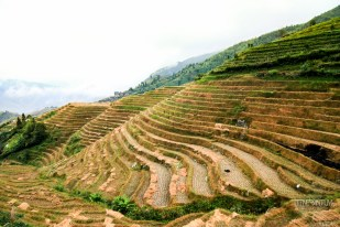 Pingan rice terraces