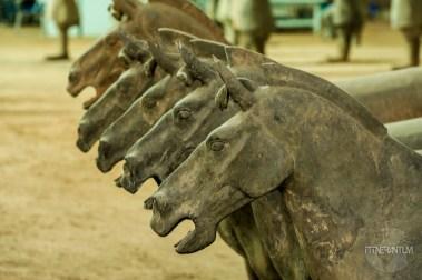 Terracotta war-horses in Xian