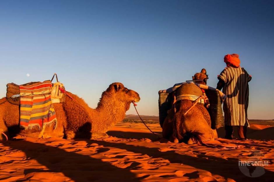 morocco-desert-ouarzazate-camels