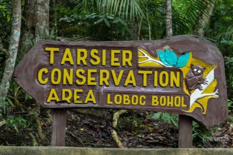 bohol-tarsier-conservation