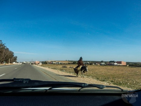 man riding his donkey on moroccan roads