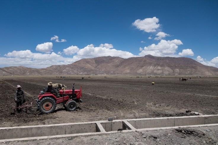 Mittlerweile sind auch Traktoren zu sehen auf den Feldern