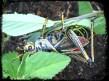 CLaSY's Grasshopper