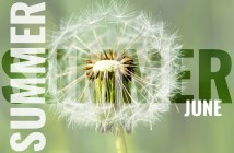 summer june postcard with white dandelion background