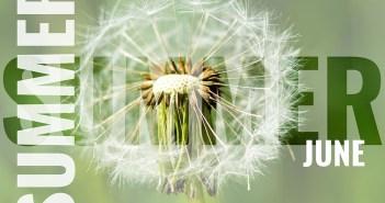 summer june postcard with white dandelion background