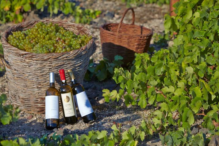 Στην Σαντορίνη το βραβείο για το καλύτερο Eλληνικό λευκό κρασί