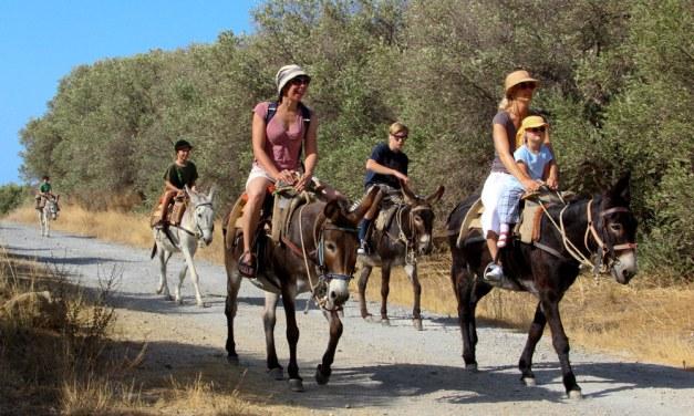 Κρήτη: Γαϊδούρια με αριθμό κυκλοφορίας