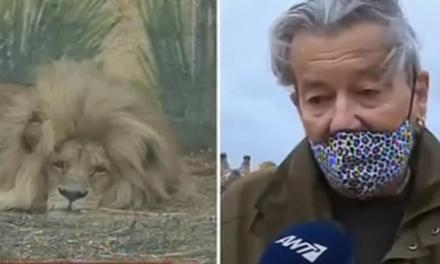 «SOS» εκπέμπει το Αττικό Ζωολογικό Πάρκο: 25 εργαζόμενοι φροντίζουν αφιλοκερδώς τα 2.000 ζώα σε «καραντίνα»