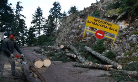 Μακρύορο Ναυπακτίας: Αφανίζουν αιωνόβιο ελατόδασος για να βάλουν ανεμογεννήτριες!