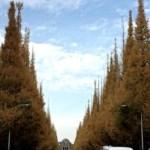 神宮外苑のいちょう並木はハンパない美しさ!