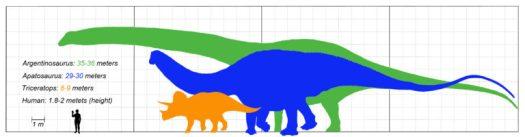 Size comparison: Argentinosaurus (green), Apatosaurus (blue), Triceratops (orange)