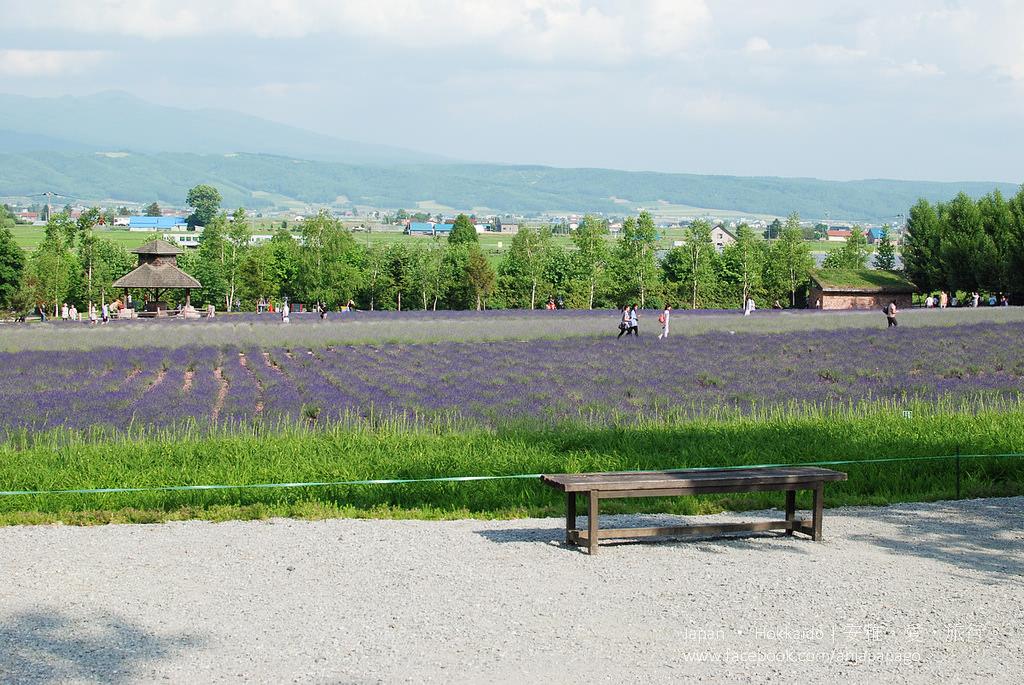 《北海道自駕遊》富良野富田農場,夏日裡繁花組成的絕美花田
