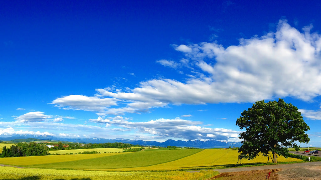 《北海道自駕遊》開車自駕遊美瑛的拼布之路與超廣角之路,看遍花田、農田、大樹與山脈