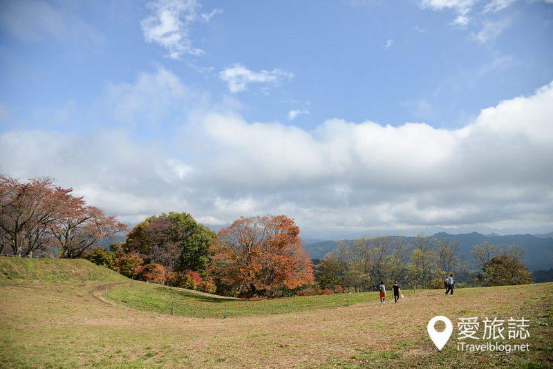 《日本長野景點》大峰高原七色楓,200年樹齡矗立山頭