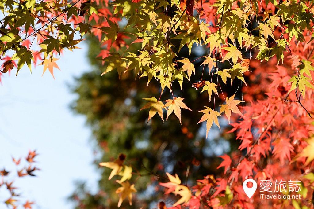 《京都賞楓景點》槙尾山西明寺:高雄三尾位於神護寺與高山寺之間精緻閒適的賞楓名所