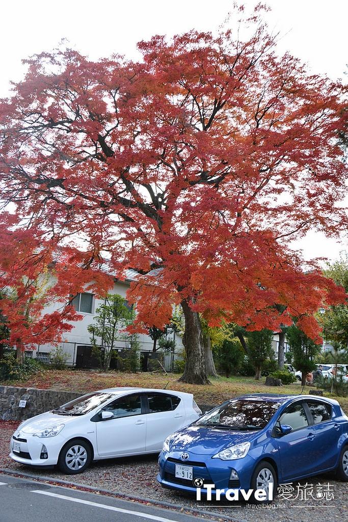 《京都賞楓景點》清涼寺:提供茶屋休憩賞楓的無料紅葉景點