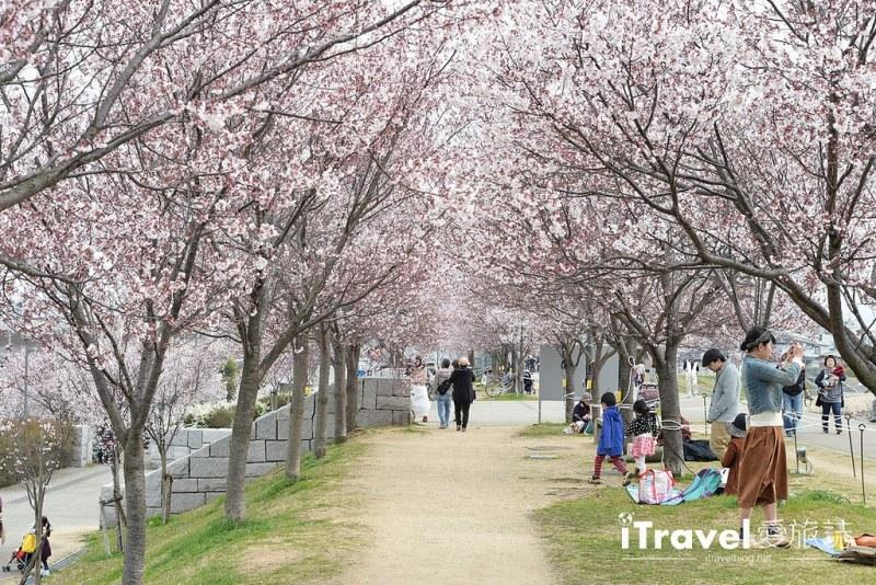 《大阪賞櫻景點》狹山池博物館:大阪最早開花賞櫻勝地