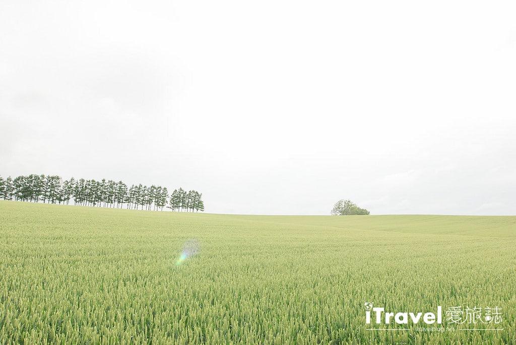 《北海道自駕遊》七星之丘:拼布之路的經典香菸廣告景點