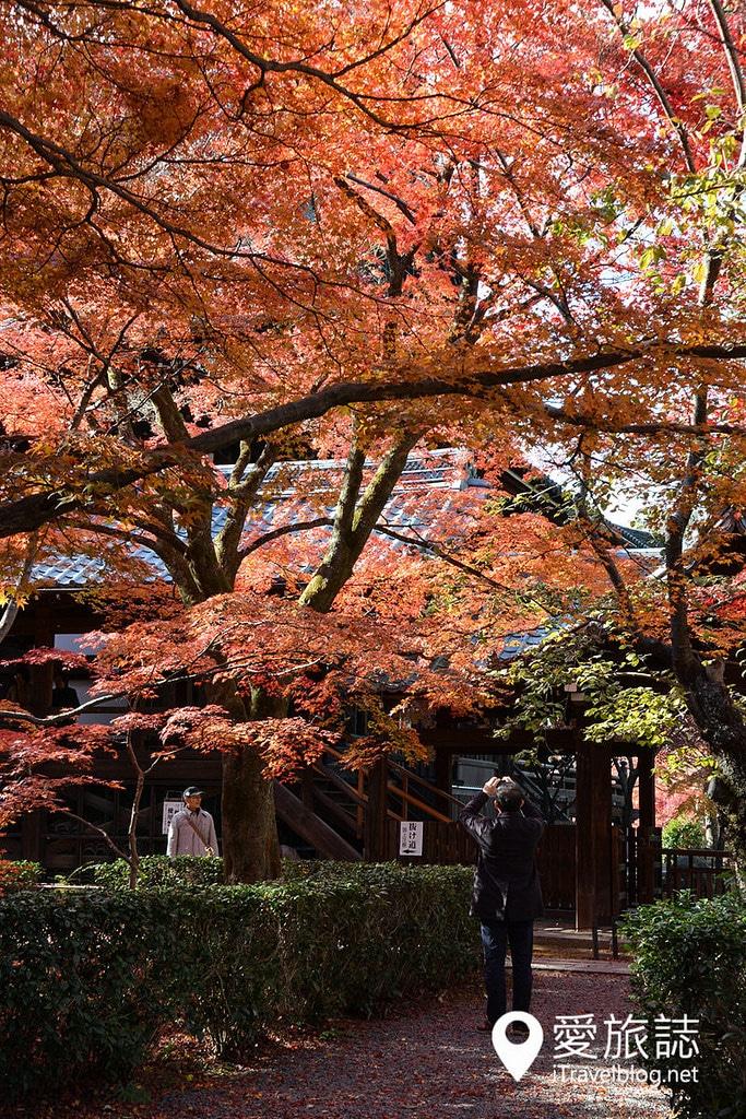 《京都賞楓景點》真如堂:金戒光明寺後方的紅葉淨土