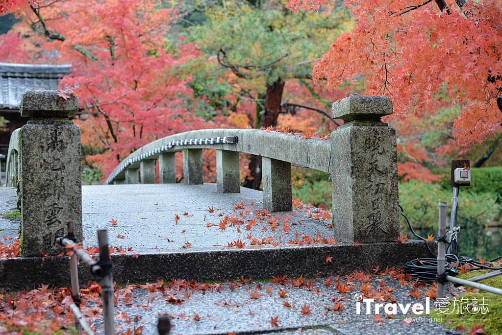 《京都賞楓景點》永觀堂:欣賞日夜皆美的東山紅葉盛景