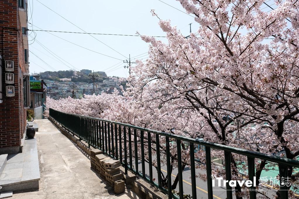 釜山賞櫻景點 東大新洞望洋路 (32)