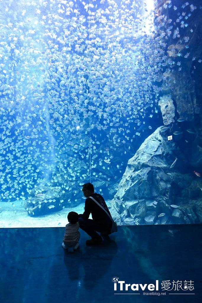 桃園八景島水族館 Xpark (12)