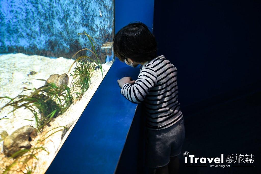 桃園八景島水族館 Xpark (27)