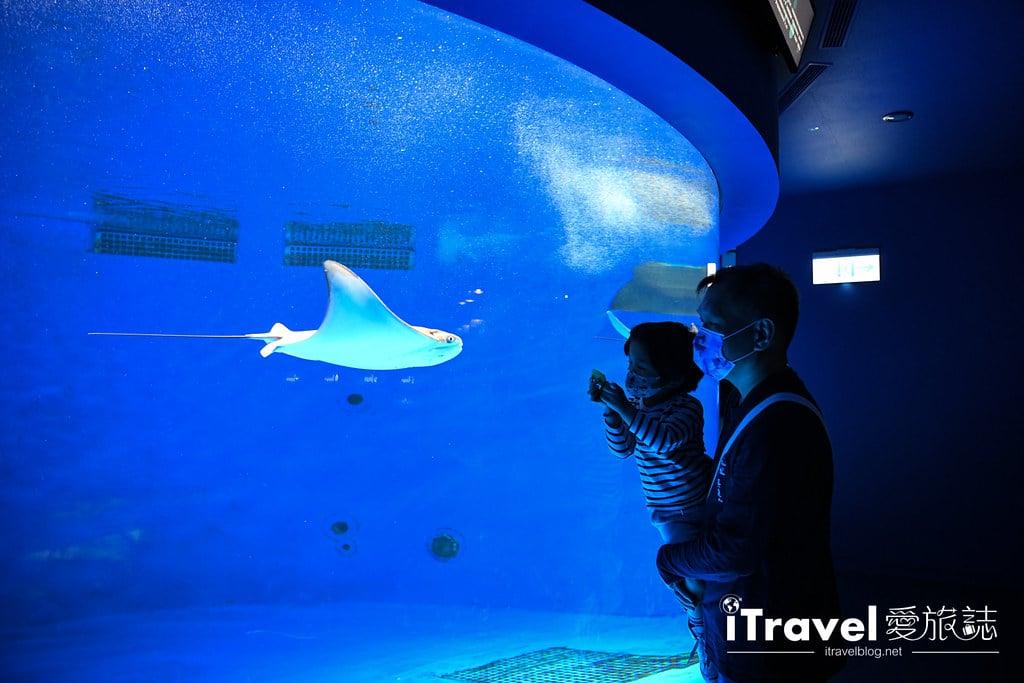 桃園八景島水族館 Xpark (33)