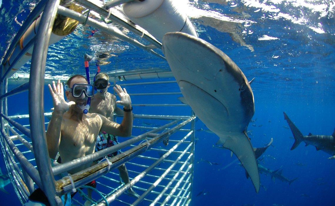 Κολύμπι με καρχαρίες: 7 μέρη για να το τολμήσεις - iTravellling