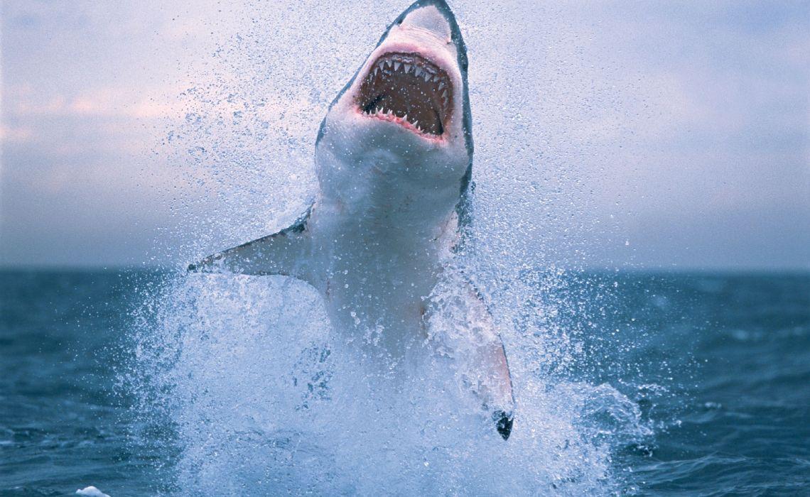 Τα σαγόνια του καρχαρία δεν είναι απλά μόνο μία ταινία! - iTravelling