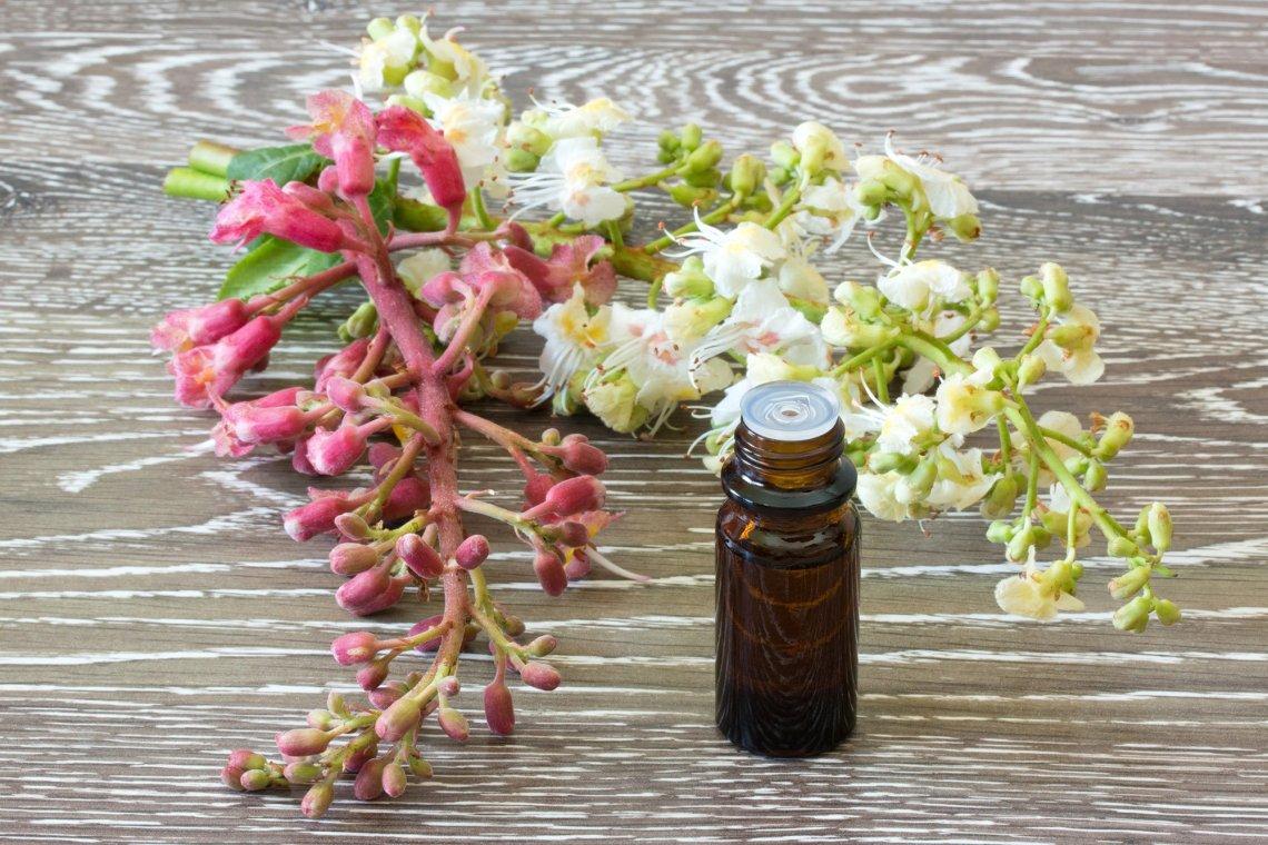 Ανθοϊάματα Μπαχ: Διώξε τις φοβίες με τα άνθη της Αγγλίας - itravelling.gr