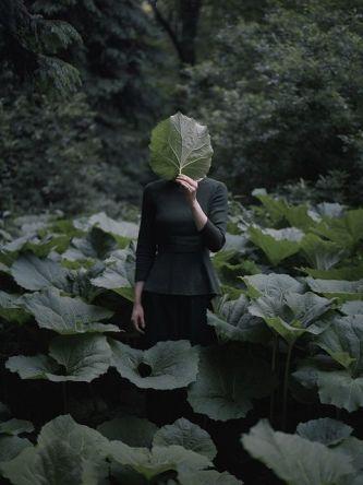 forest5.jpg