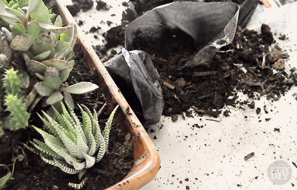 I Try DIY | Mikko Tries Gardening