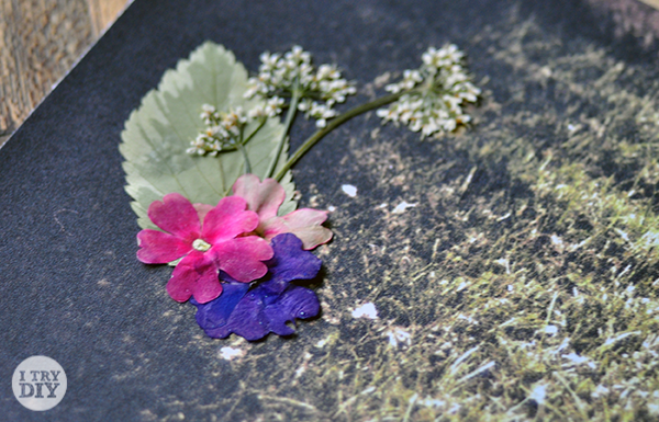 I Try DIY | Old Photos + Pressed Flowers = ♥♥♥