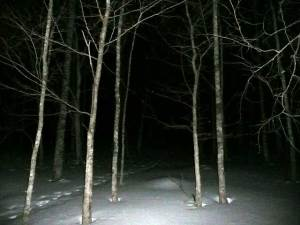 夜の阿寒の森
