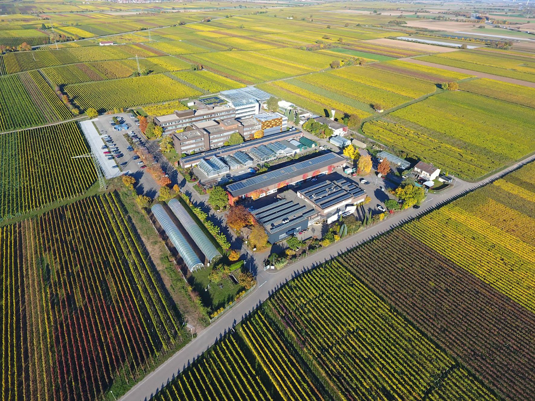 Studium zum Master Weinbau und Oenologie am Weincampus Neustadt