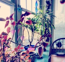 Just some house plants