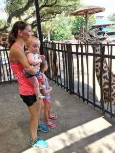 giraffe hazel