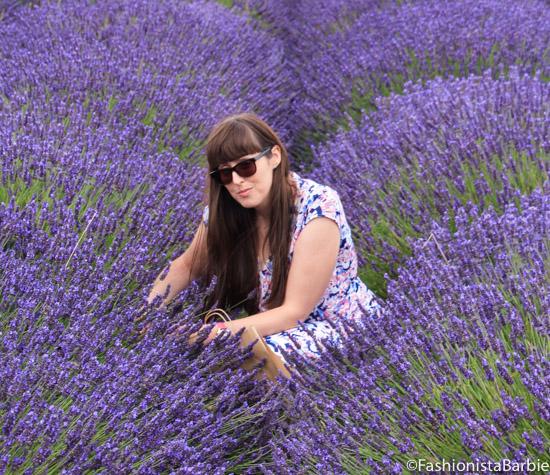 lavender-farm-very-dress-14