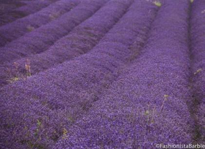 lavender-farm-very-dress-29
