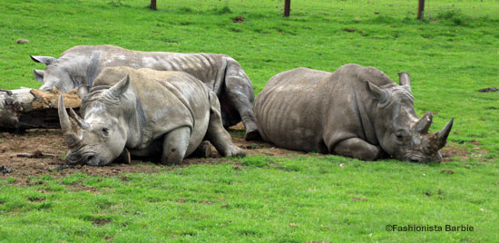 rhinos, longleat, day trip, uk