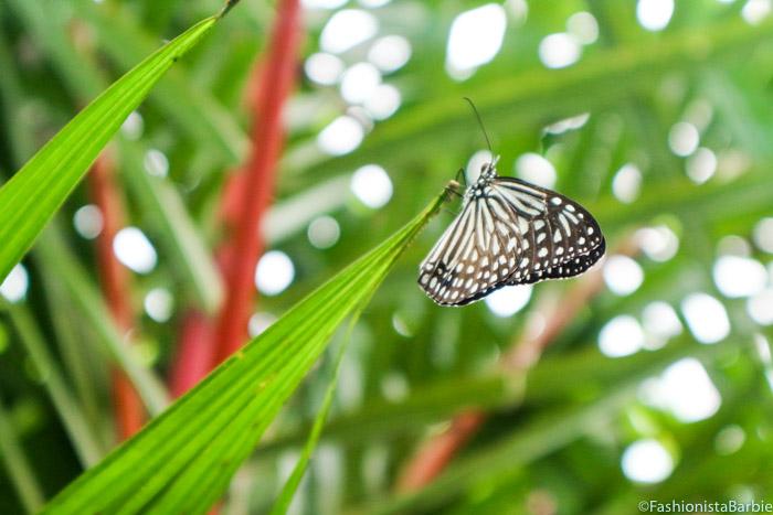 Fashionista Barbie, Malaysia, Butterflies