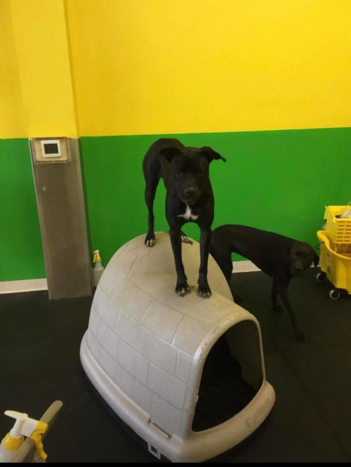greenfield doggy daycare