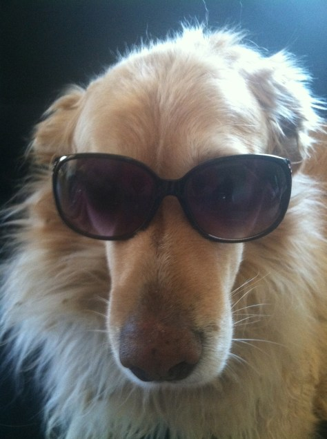 dogs in sunglasses always need a reason to laugh.
